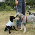 我認識的狗狗 - 3