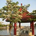 台灣原生種的流蘇已開出白茫茫花海,滿樹銀色世界灌頂樹頂景緻,有如四月降瑞雪美不勝收,吸引喜好關愛目光。