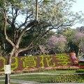 臺南賞花季,每年春節過後,是府城花季的開始,繽紛行道樹花開處處,有木棉花、黃花風鈴木、紅花風鈴木、羊蹄甲、阿勃勤等陸續綻放。