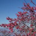 2011.2.4~6 春節南部趴趴走 - 1