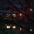 虎年春節前 - 3