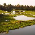 面積約達1466公頃鰲鼓濕地,區內包含沼澤、灘地、魚塭、水旱田等豐富地貌。
