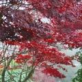秋天的風景,五顏六色...