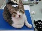 歡迎愛貓懂貓不懂貓的人都來逛逛