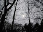 南怡島之森林小道,是韓劇冬季戀歌拍攝場景之一,身處之中覺得好浪漫哦~~