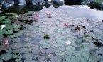 ^_^在峇里島Grand_Hyatt飯店拍了很多蓮池的景喲.^^