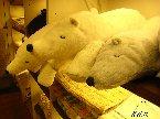 在日本商店看到的......超可愛的!摸起來很舒服的說~好想買