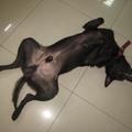 金富昌的狗睡午覺