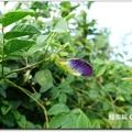 湧椿茶花園 - 53