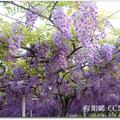 淡水紫藤咖啡園 - 71