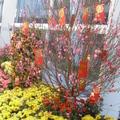 香港機場每到過年,總會擺放許多盆栽做造型,有金桔及桃花感覺喜氣洋洋。(本圖片為筆者所拍攝)