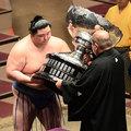 日本大相撲 優勝奪冠 及比賽照片,從2008年11月場所至今