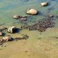 基隆八斗子海豹石