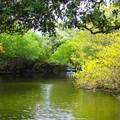*綠色時光隧道-台江公園
