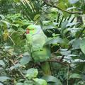 綠世界生態園區