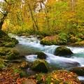 秋之奧入瀨溪流