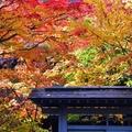 中野山、香雪園、五稜廓