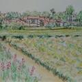 龍潭茶園農家 - 8