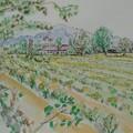 龍潭茶園農家 - 18