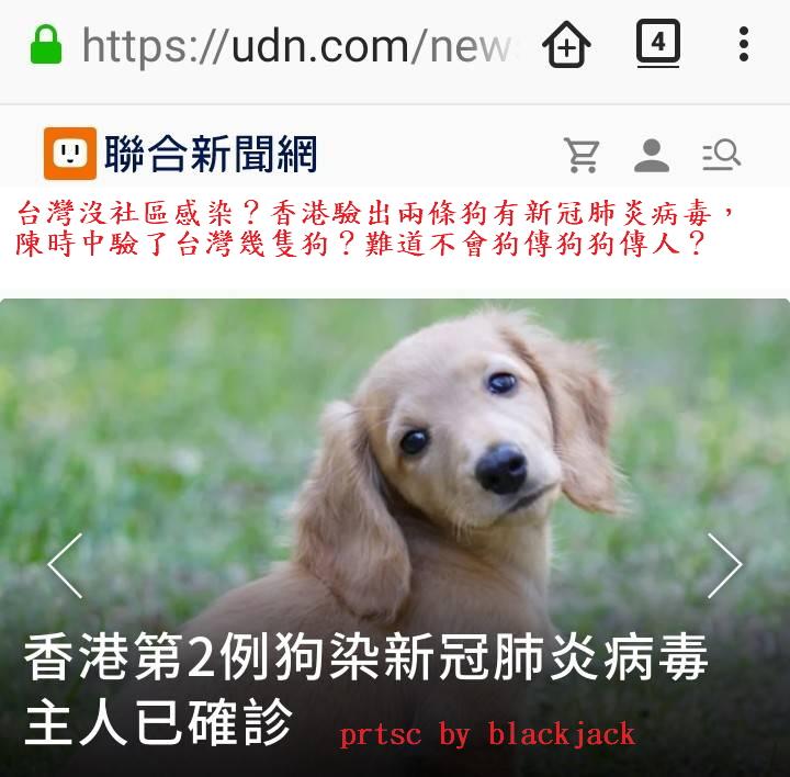 台灣沒社區感染?香港驗出兩條狗有新冠肺炎病毒,陳時中驗了台灣幾隻狗?難道不會狗傳狗狗傳人?