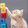 麵粉小花貓