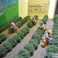 早期以農耕為主的生活,進入了日據時代之後,日本政府為了充分開發台灣的天然資源,便展開各項的產業開發政策,其中與客庄生活息息相關的產業