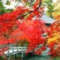 秋是紅葉的永觀堂