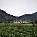 春雨陽明山