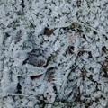 2018 冬霜 Iron Horse State Park  01