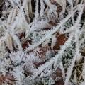 2018 冬霜 Iron Horse State Park  006