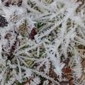 2018 冬霜 Iron Horse State Park  005