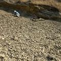 Stonerose Fossil Site