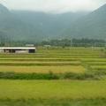 美麗花東縱谷