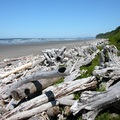 Beach 2, Olympic Peninsula