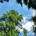 微軟總部園區裡的樹屋 07