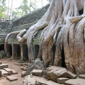 Angkor-Ta Prohm 2010