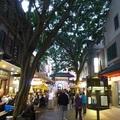 雪梨達令港灣中國城 Darling Harbor Chinatown