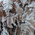 2018 冬霜 Iron Horse State Park 08