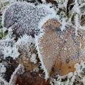 2018 冬霜 Iron Horse State Park  07