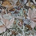 2018 冬霜 Iron Horse State Park  06