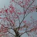 詩家清景在新春,綠柳才黄半未勻。若待上林花似錦,出門俱是看花人。    —唐  楊巨源《城東早春》