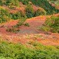 利用中秋假期到北海道爬山賞紅葉