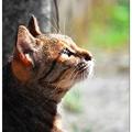 介於家貓和流浪貓之間的舒適狀態,侯硐的貓咪們看遍遊客來往,在慵懶的夏日午后,有著分外的淡定。