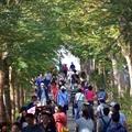 台中花博:后里森林園區(花馬道)