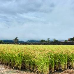 新東和米舖(池上)