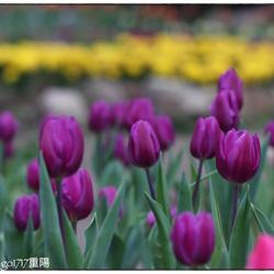 2019桃源仙谷