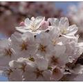 公園內有水庫、濕地及松林等,春天時節櫻花盛放,是市民休憩場所。