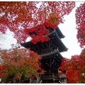 京都~真如堂の紅葉