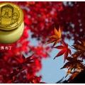 奈良大佛與約一千二百隻鹿群是主要觀光景點。若於秋日紅葉嫣紅時到訪,景色更美!