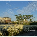 每年11月中是杭菊秋收的季節,沿台13外環線至九湖村可見一畝畝雪白的花田。